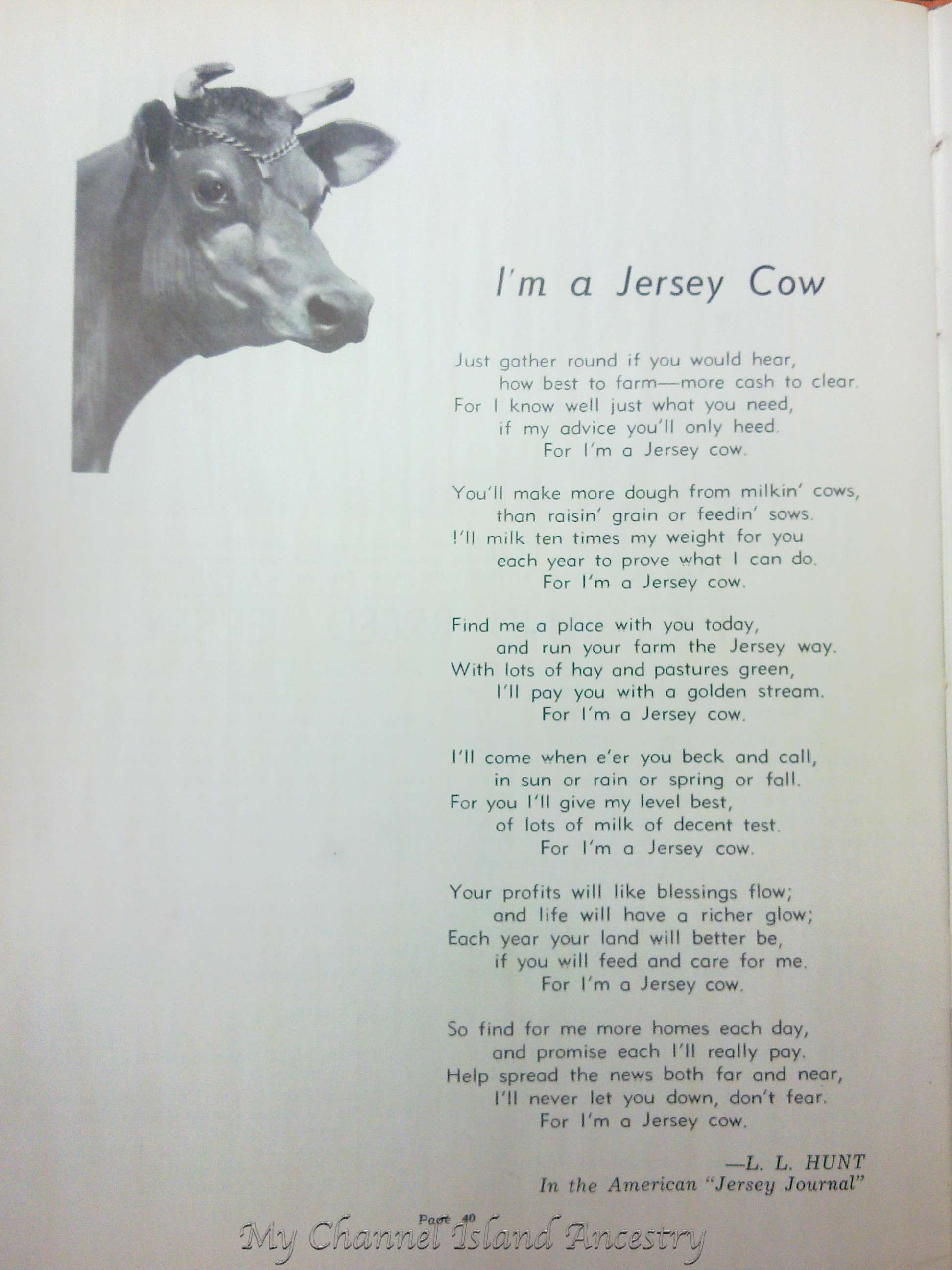 Uncategorized Cow Poems jersey cow my channel island ancestry advertisements